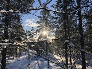 寒いけど最高!冬のフィンランド
